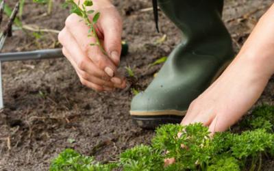 la passione delle erbacce e comprendere gli altri